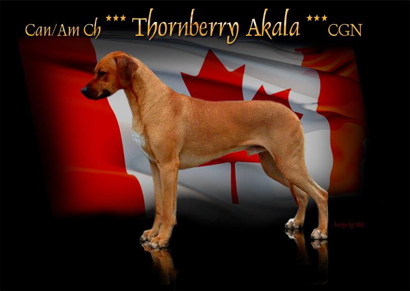 http://www.thornberryridgebacks.com/Canadian%20bred%20Akala.jpg