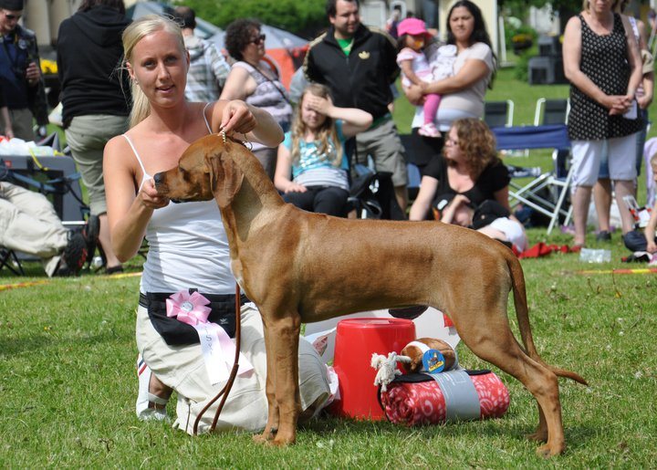 Kadamo C-Tilley--Best of Breed in Specialty Show
