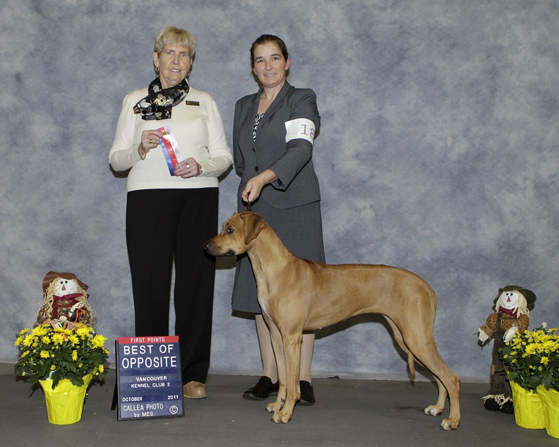 TOPANGO at Vancouver Kennel Club Oct 30-Best of Opposite