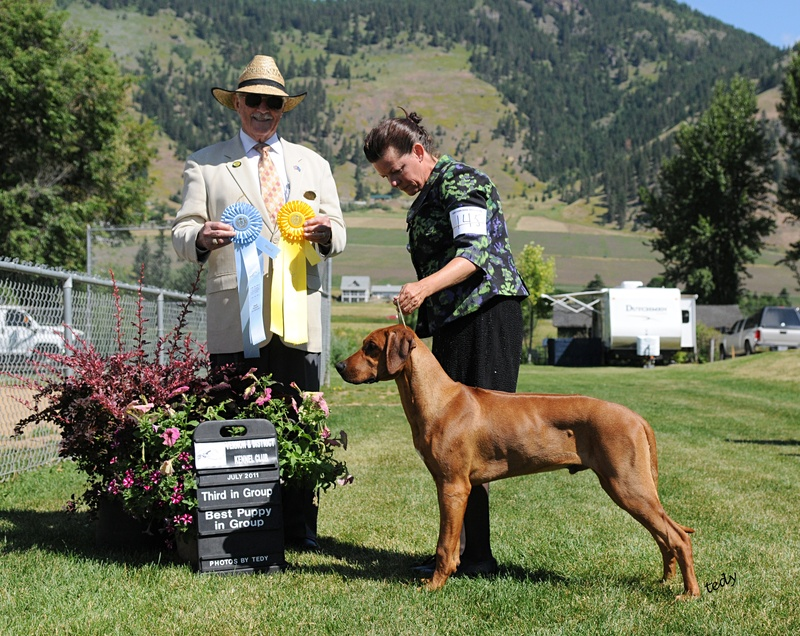 Kodas ribbons from his Group3 win and Puppy Group win in Vernon July 2011