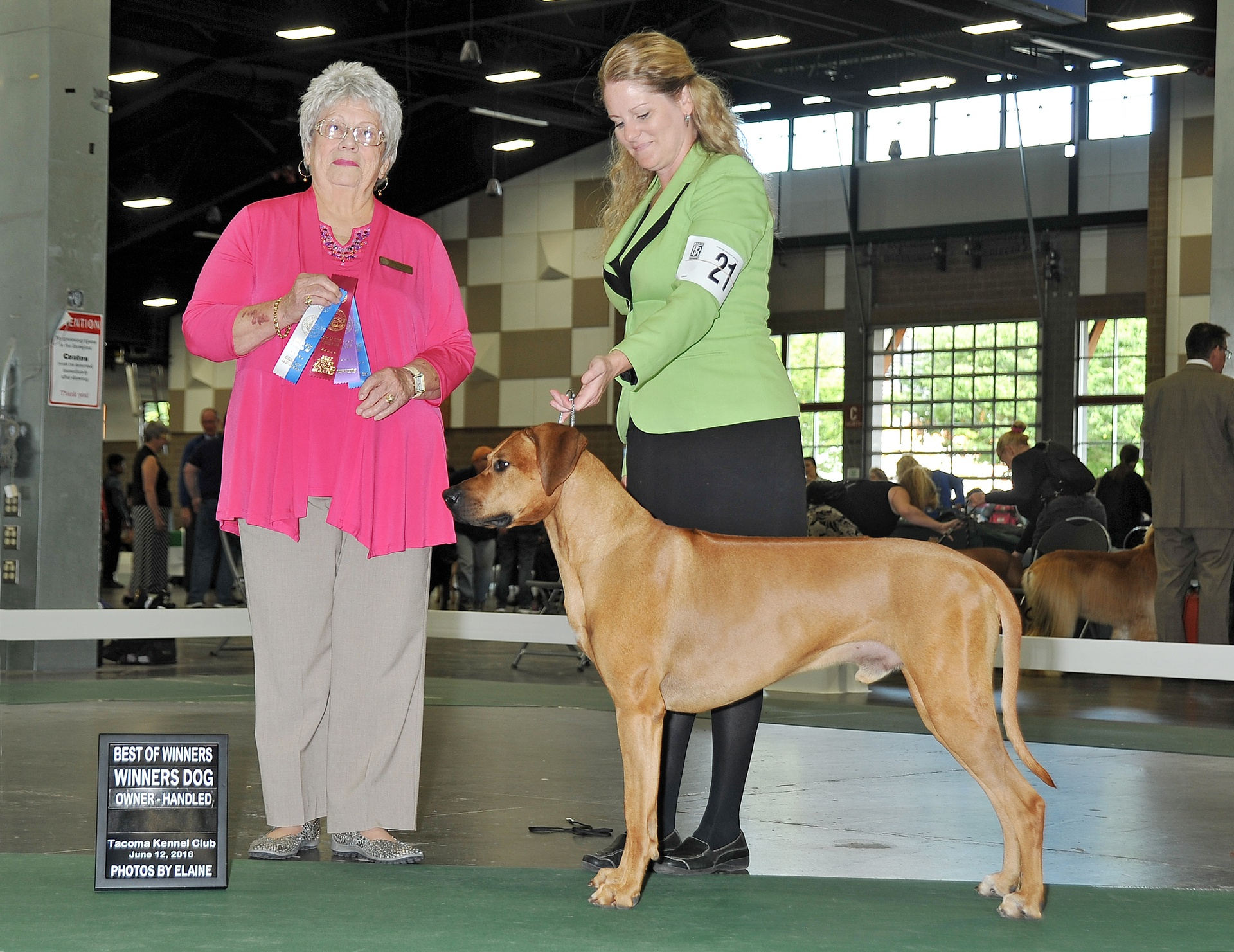 Finn- Best of Winners and also competed in the Owner-Handled competition where he received Best of Breed and a Hound Group 3.